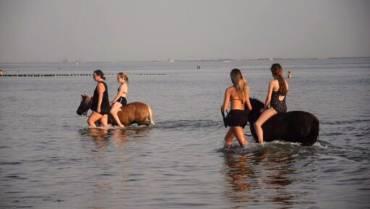 Met de pony's naar strand 26 juli 2019